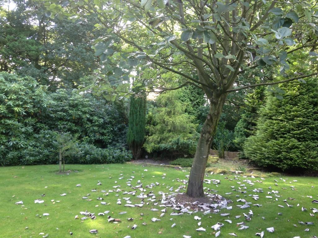 Gardens at Nunsmere