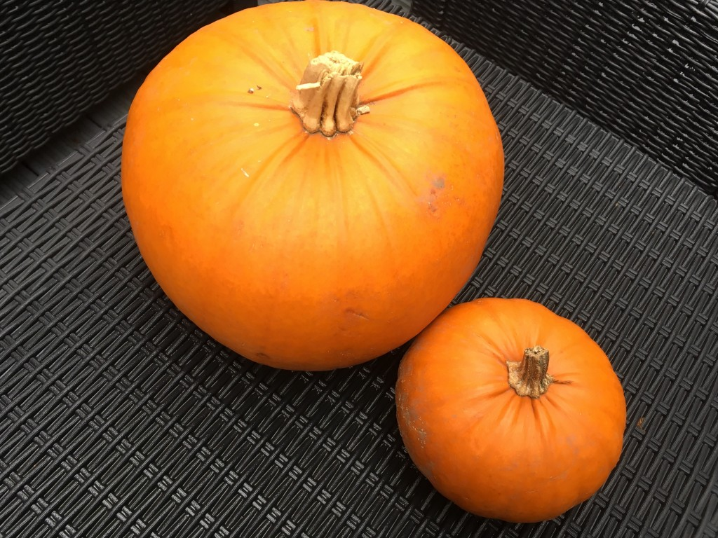 Pumpkins - The Williams World