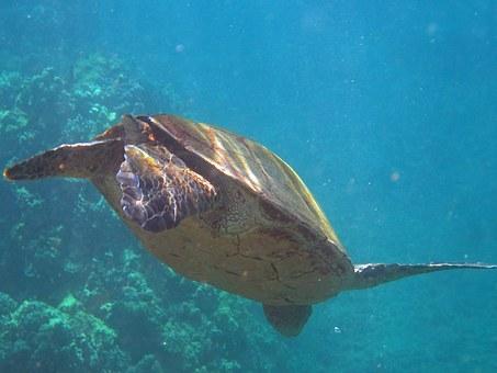 Marine life in Hawaii