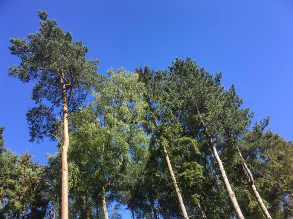 Blue skies at Centerparcs